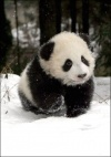 discoverpanda